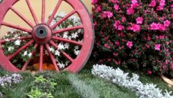 Azaleas and the wheel